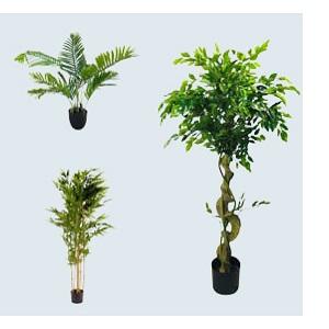 1 Metre & Above Artificial Plants