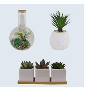 Small Succulents & Faux Bonsai